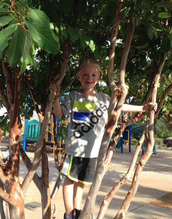 Shep got stuck in his first tree on the playground. I like this picture because I think he looks sweet. I hate it because I think he looks 7.